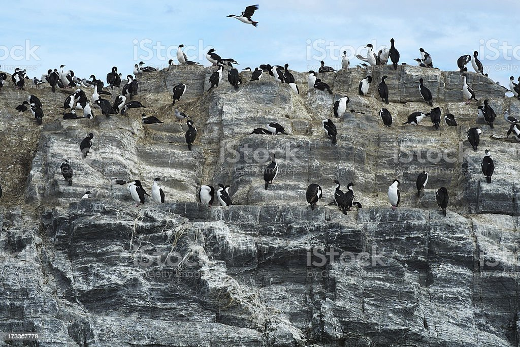 Bird Colony on the Beagle Channel royalty-free stock photo