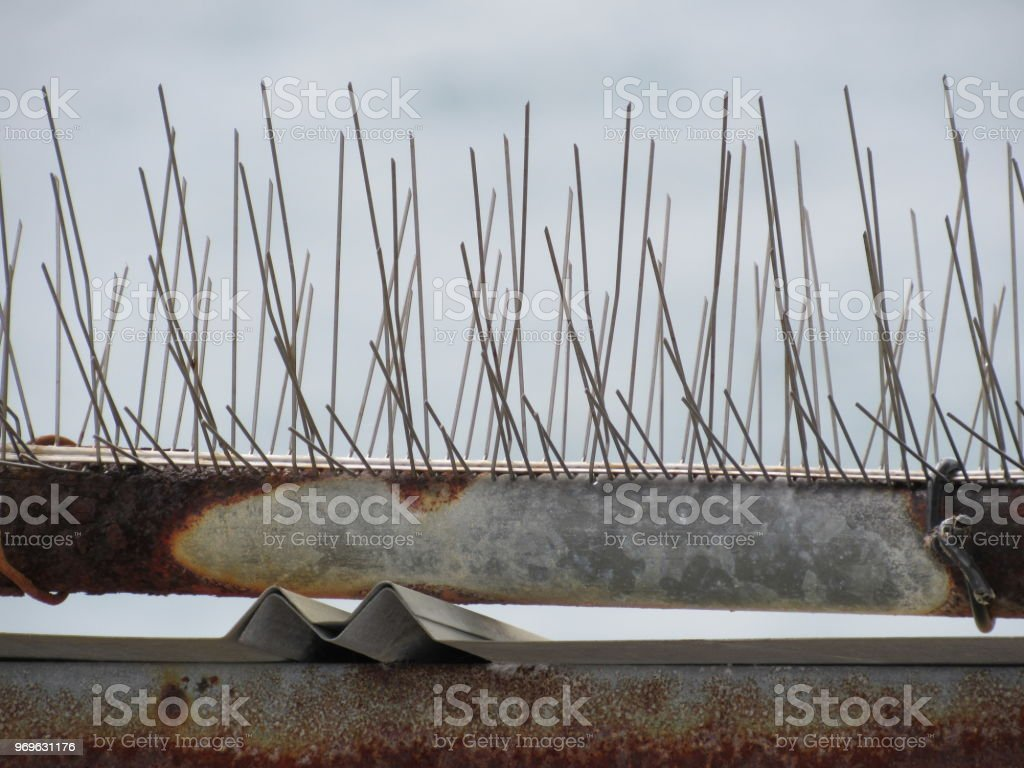 Bird deterrent spikes stock photo