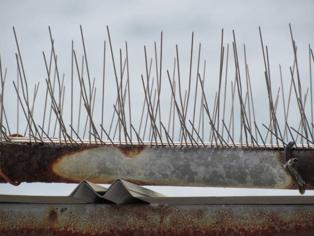 Bird deterrent spikes stock photo