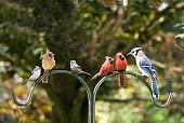 istock Bird Diversity Meeting 120627107