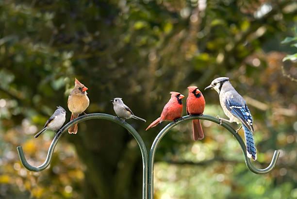 Bird diversity meeting picture id120627107?b=1&k=6&m=120627107&s=612x612&w=0&h=qawuanxh2jqdq2bhbgwejllaaput8kee5zpzbkpc5zw=