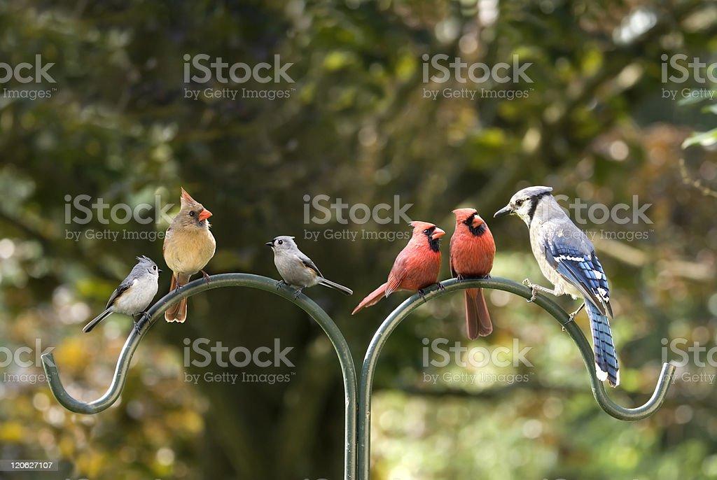 Bird Diversity Meeting stock photo