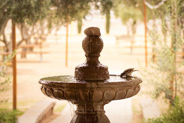 Bird Trinkwasser aus Brunnen – Foto