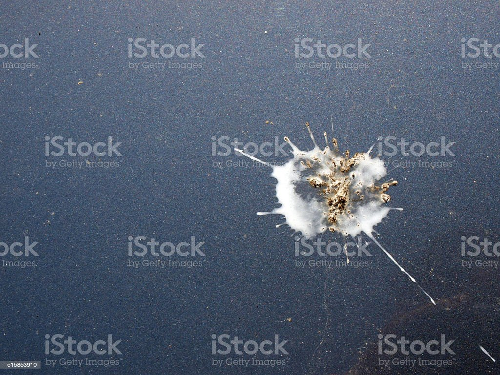 Bird droppings 3 stock photo