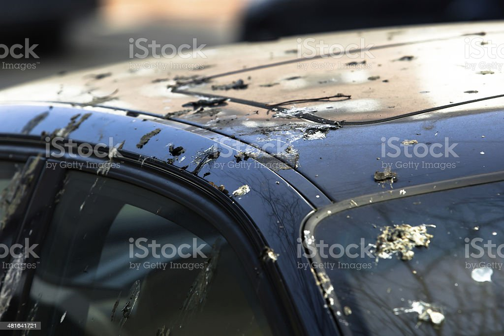 Bird droppings on car stock photo