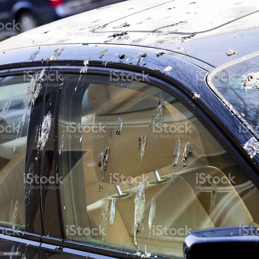 Bird droppings on car stock photo