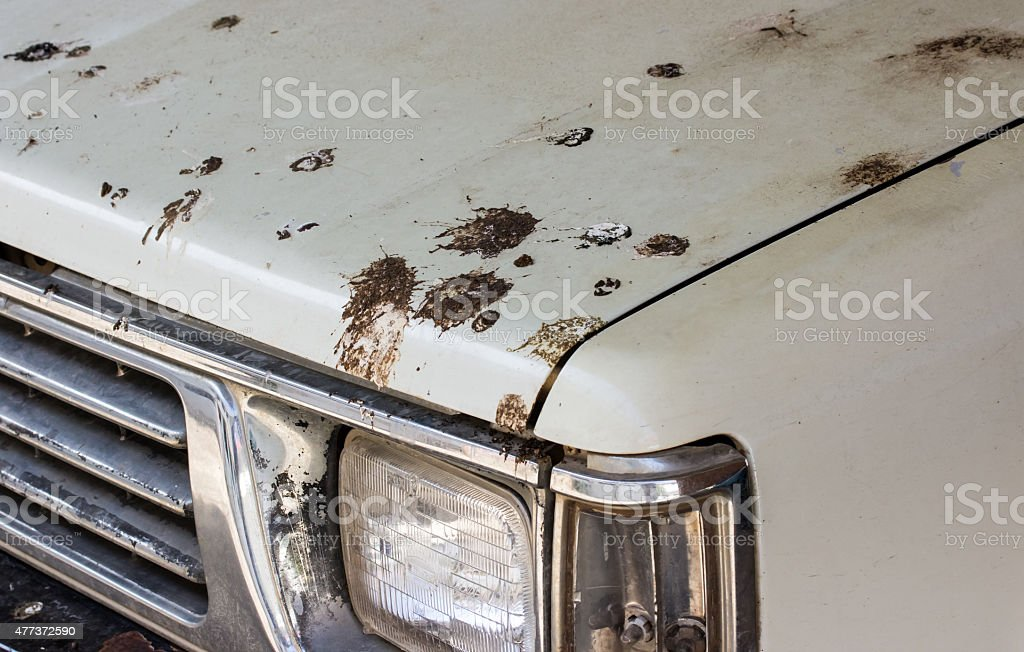 Bird droppings on my white old car! stock photo