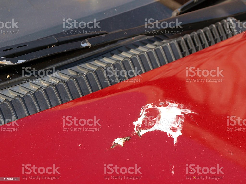 Bird droppings stock photo
