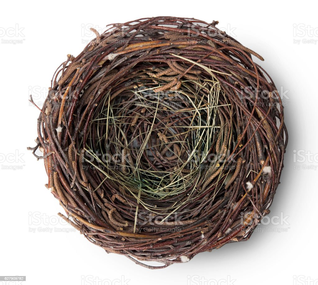 Bird empty nest up above view on white. stock photo