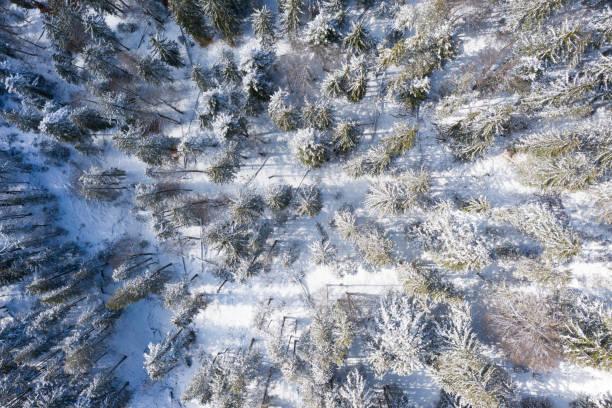 Blick aus der Vogelperspektive auf verschneite europäische Fichten im kalten Winter – Foto