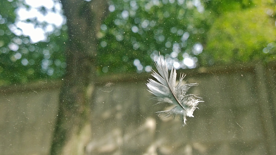 Bird feather hanging on dirty glass on a background of greenery