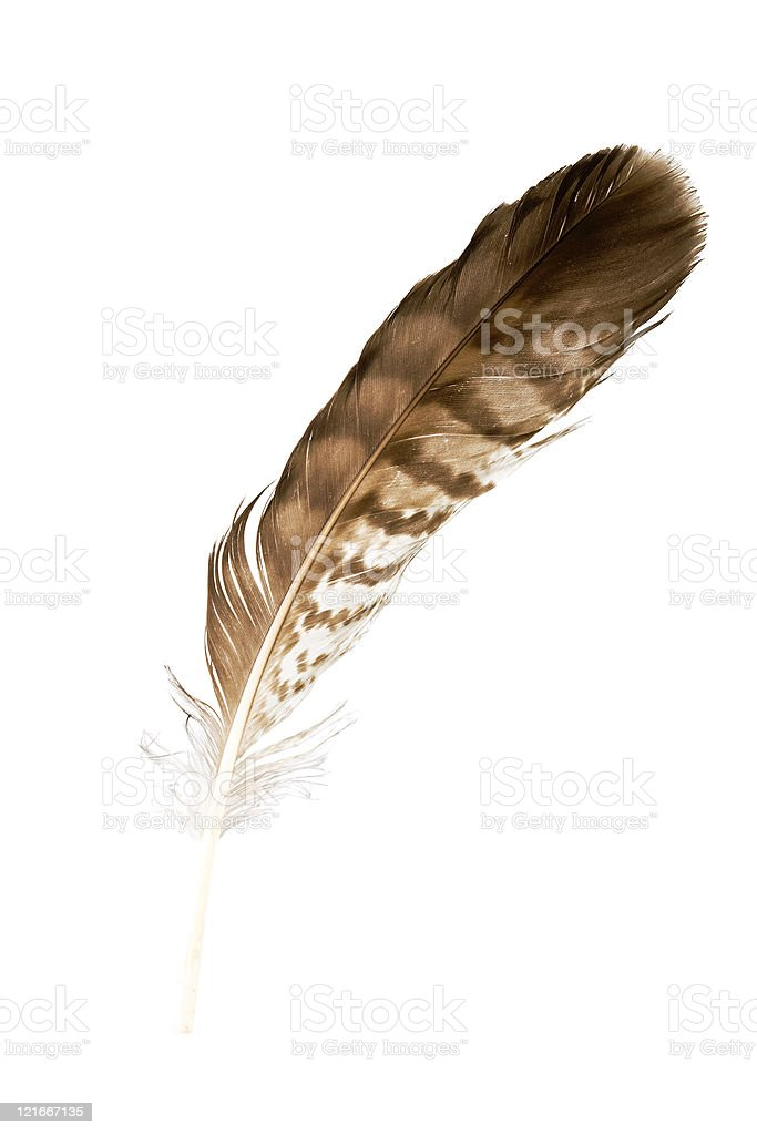 Bird feather isolated on white background royalty-free stock photo