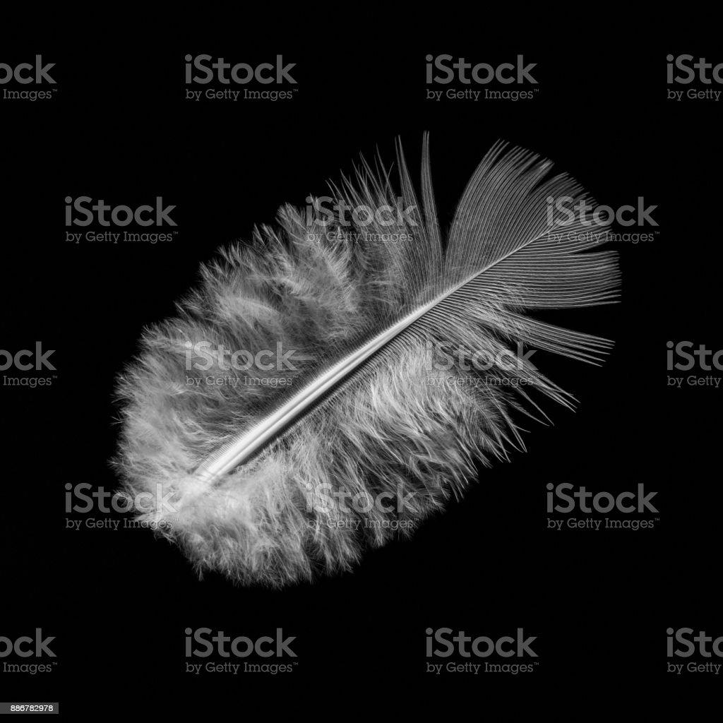 Bird feather on  black stock photo