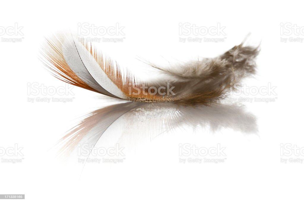 Bird Feather royalty-free stock photo