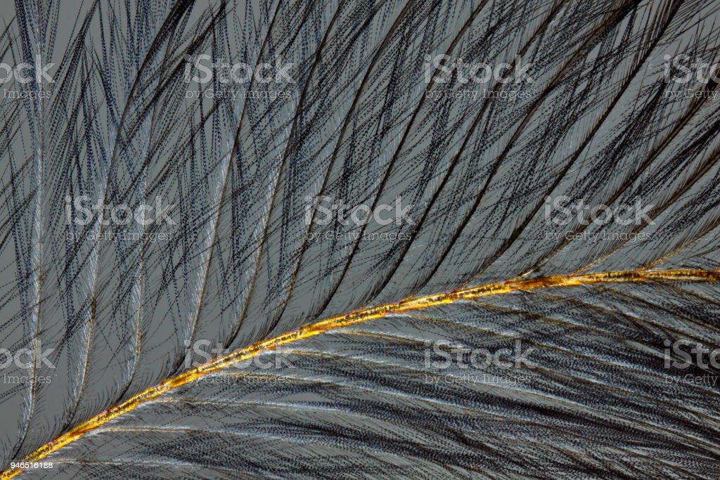 Bird feather under polarized light stock photo
