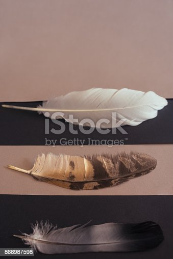 istock Bird  feathers colored differently on stripes background 866987598