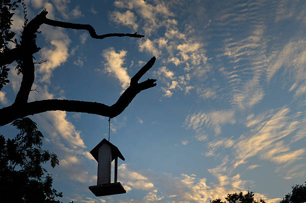Bird feeder and sky stock photo