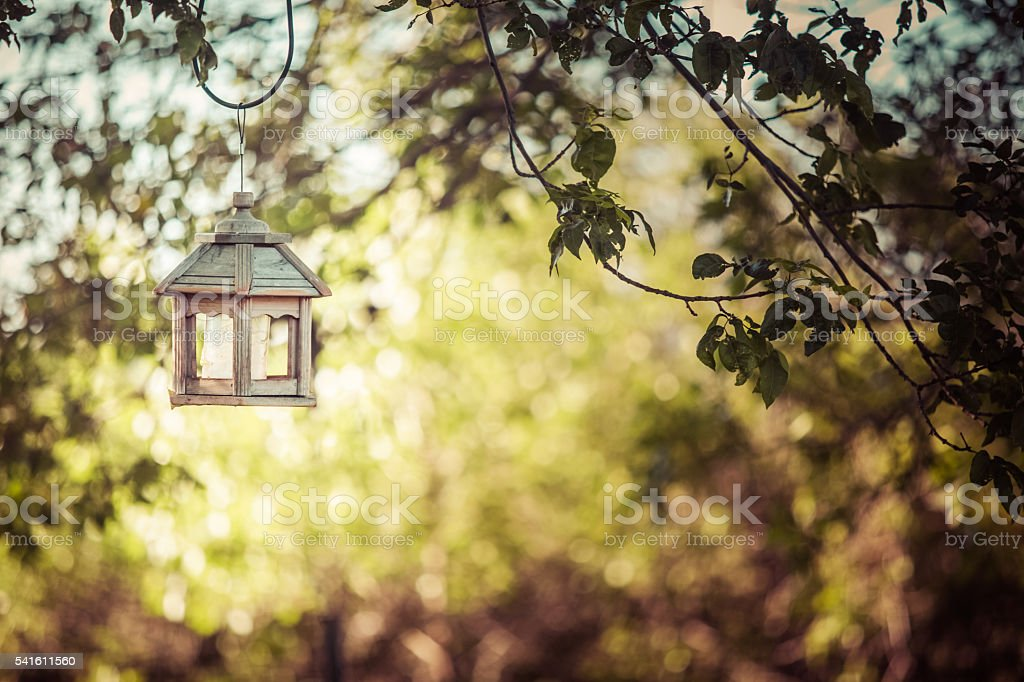 Bird Feeder Hanging From Tree Branches stock photo