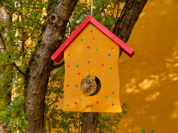 bird feeder in a tree stock photo