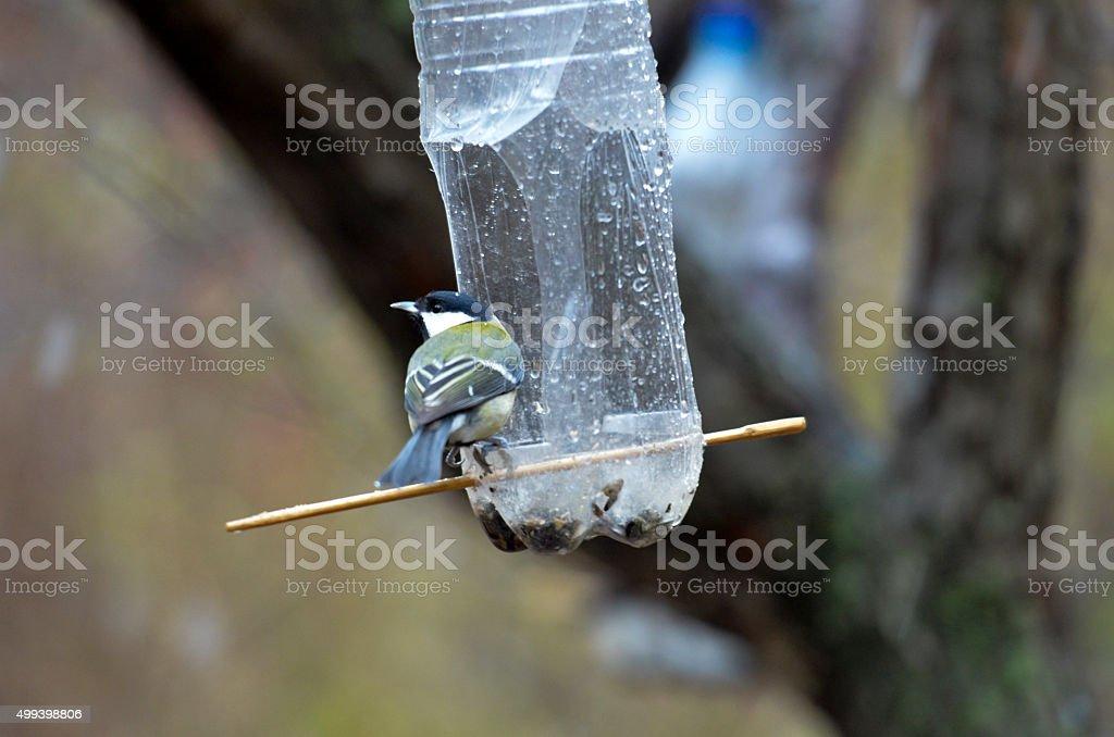Bird feeder in winter park stock photo