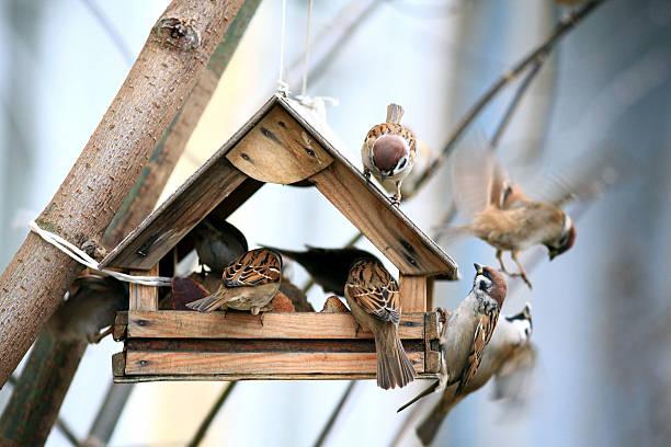 Pájaro de alimentadores - foto de stock