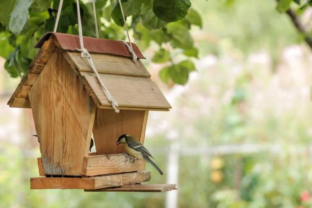 Bird feeding at backyard feeder picture id831484332?b=1&k=6&m=831484332&s=612x612&w=0&h=b1rplcqcu0om2lsoo3yzalqx eq p4nb5vl6c3qhstc=