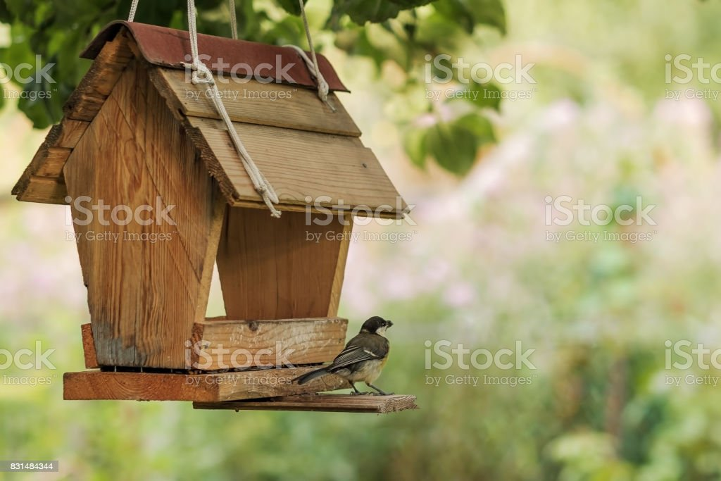 Bird feeding at backyard feeder stock photo