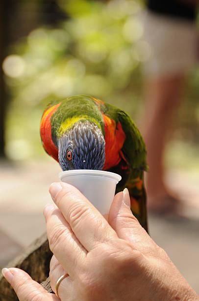 Bird Feeding From Hand at the Zoo stock photo