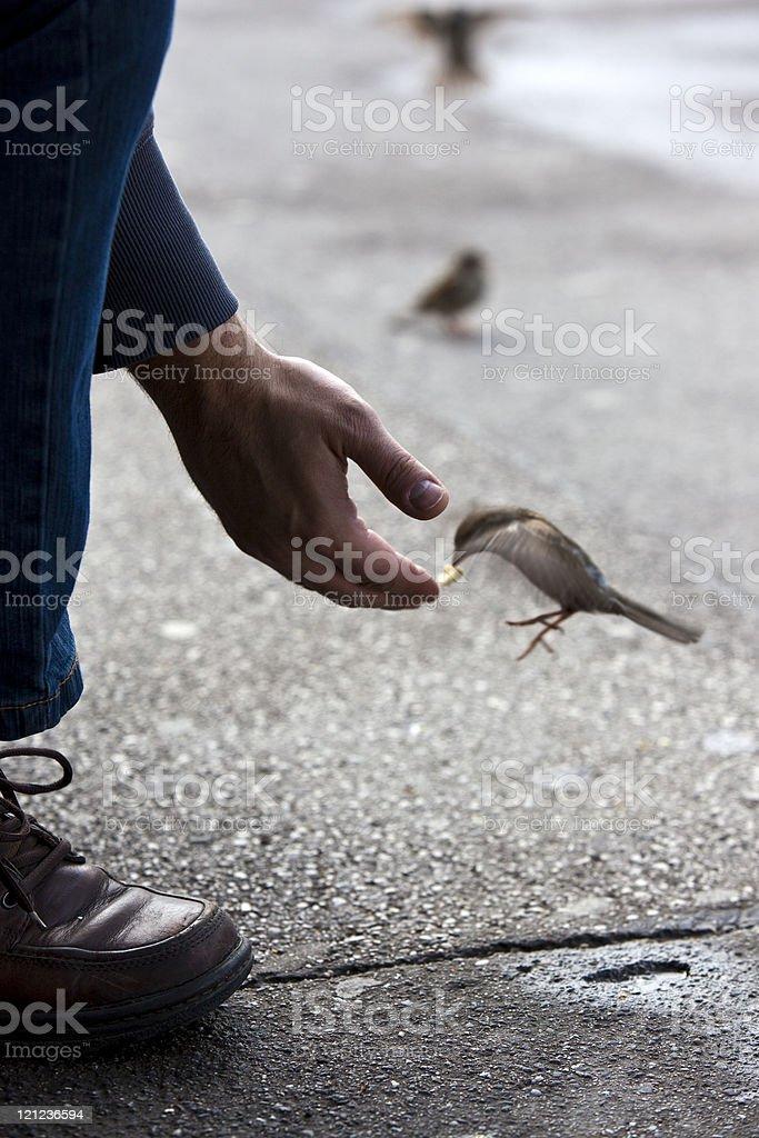 bird feeding hand stock photo