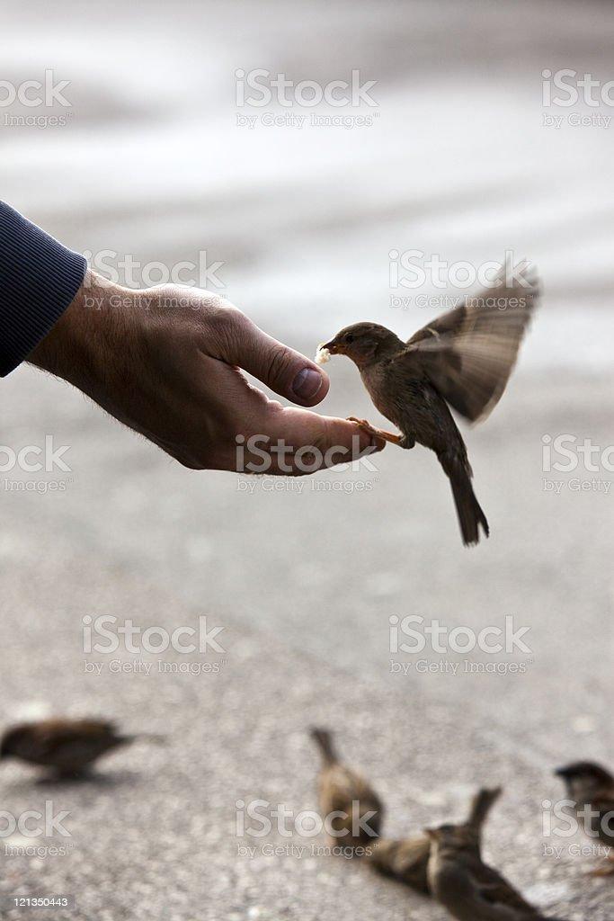 bird feeding hand with wonderful available light stock photo