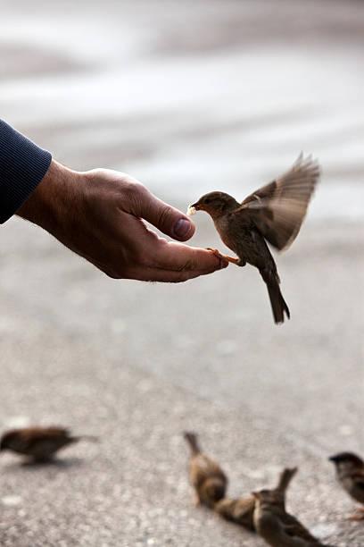 Vögel Füttern hand mit wunderbaren verfügbar light – Foto