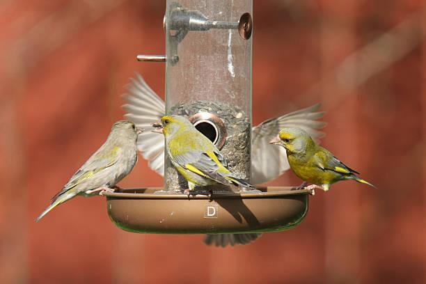 Bird Feeding bildbanksfoto