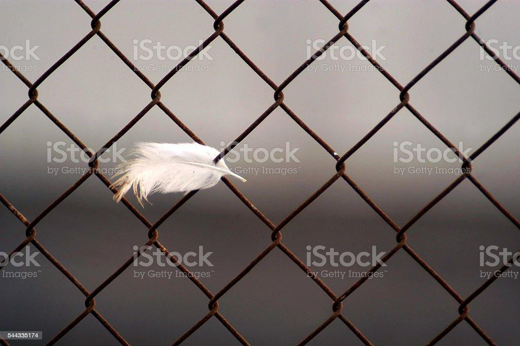 Bird Flu Outbreak stock photo