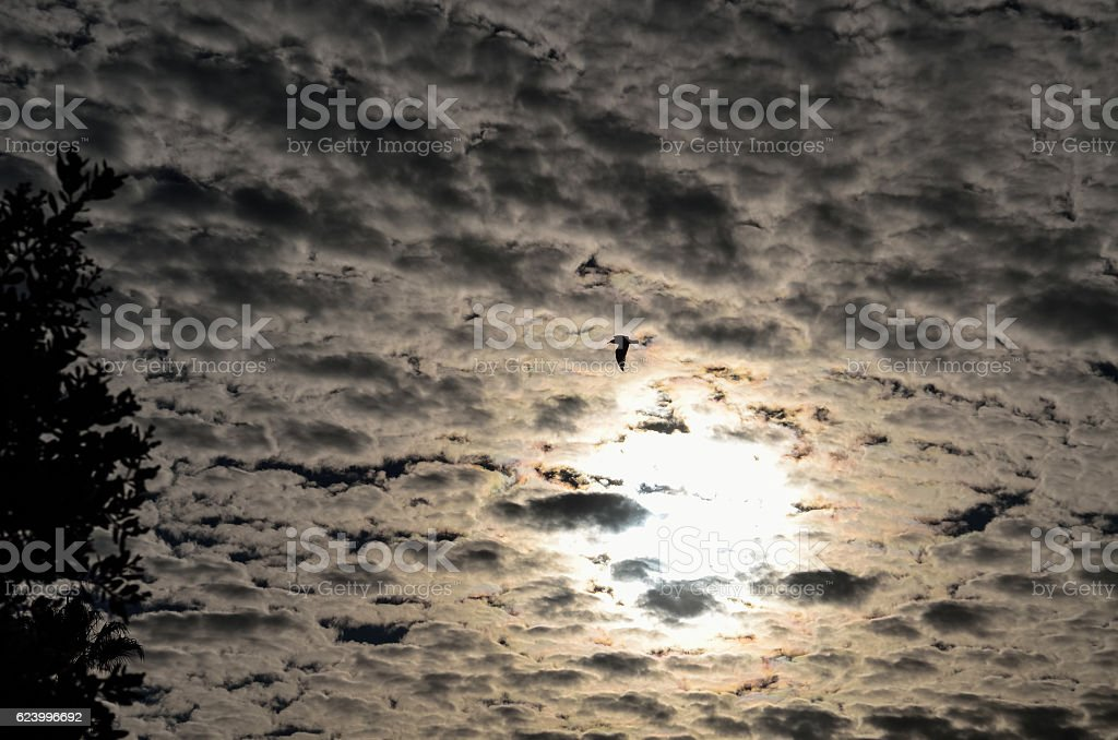 Bird flying against beautiful cloudy sky with sun stock photo
