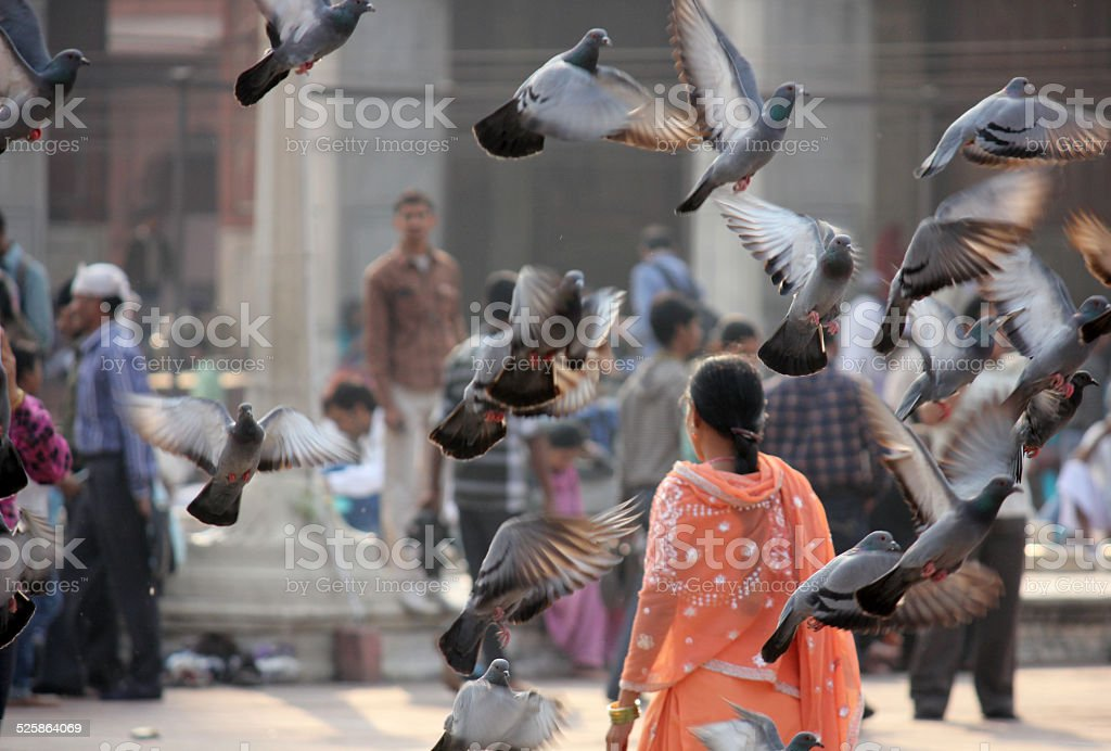 Bird flying and Indian woman stock photo