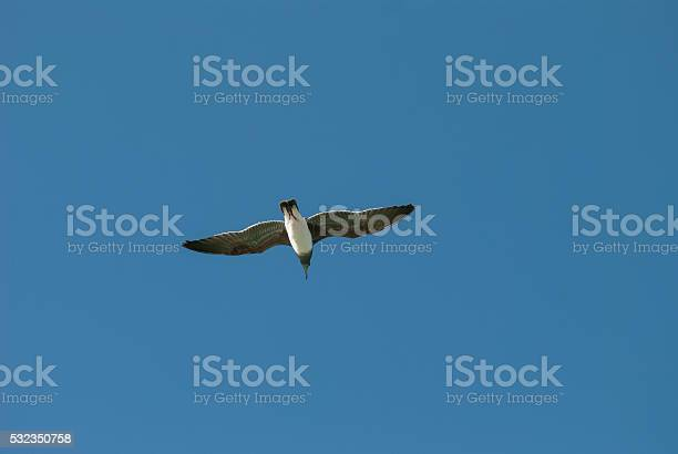 Photo of Bird flying in the blue sky