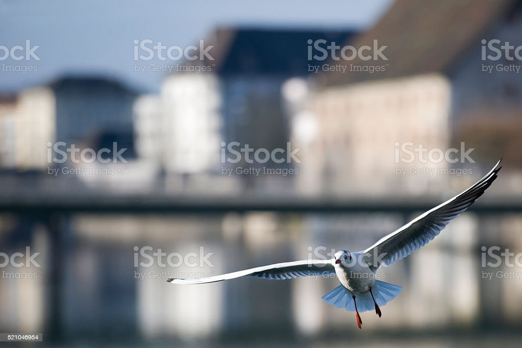 Bird flying in the city stock photo