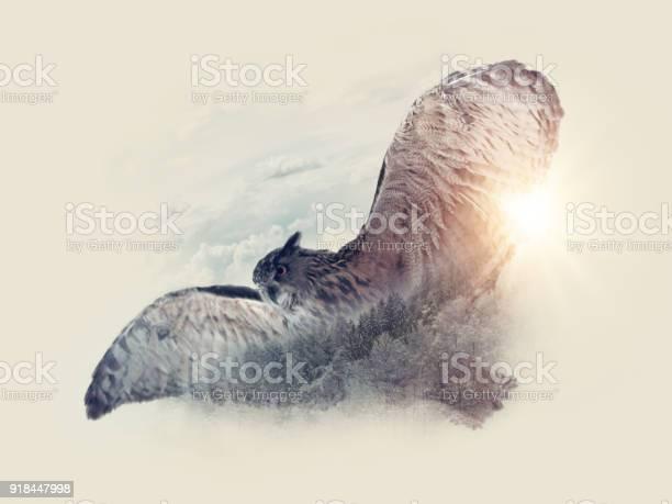 Bird flying in the sky picture id918447998?b=1&k=6&m=918447998&s=612x612&h=ti7cv487534remg56sucxa7hw7vcup4rny5094axzic=