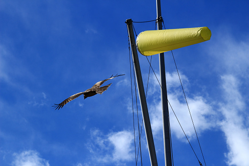 A bird flying in the strong wind blowing sky