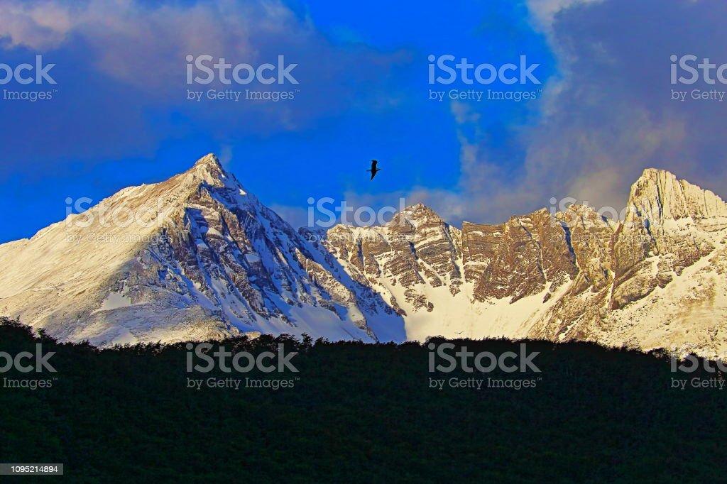 Pássaro voando sobre montanhas enevoadas de andes, Ushuaia - Tierra Del fuego, Argentina - foto de acervo
