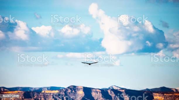 Bird flying over canyons colorado picture id802670398?b=1&k=6&m=802670398&s=612x612&h=pauw2papxyq 51ywvp4trgzdw13evcpnudzzkivwj20=