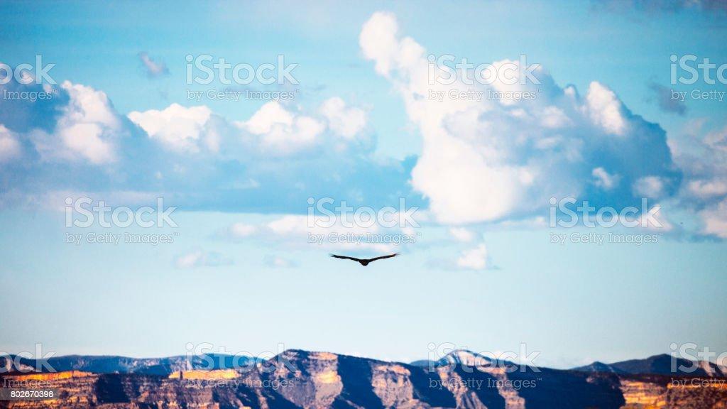 Bird flying over canyons, Colorado stock photo