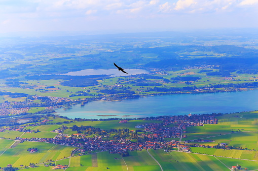 Bird flying over Forggensee lake in Bavarian alps at gold colored autumn – Fussen and Schwangau - Germany