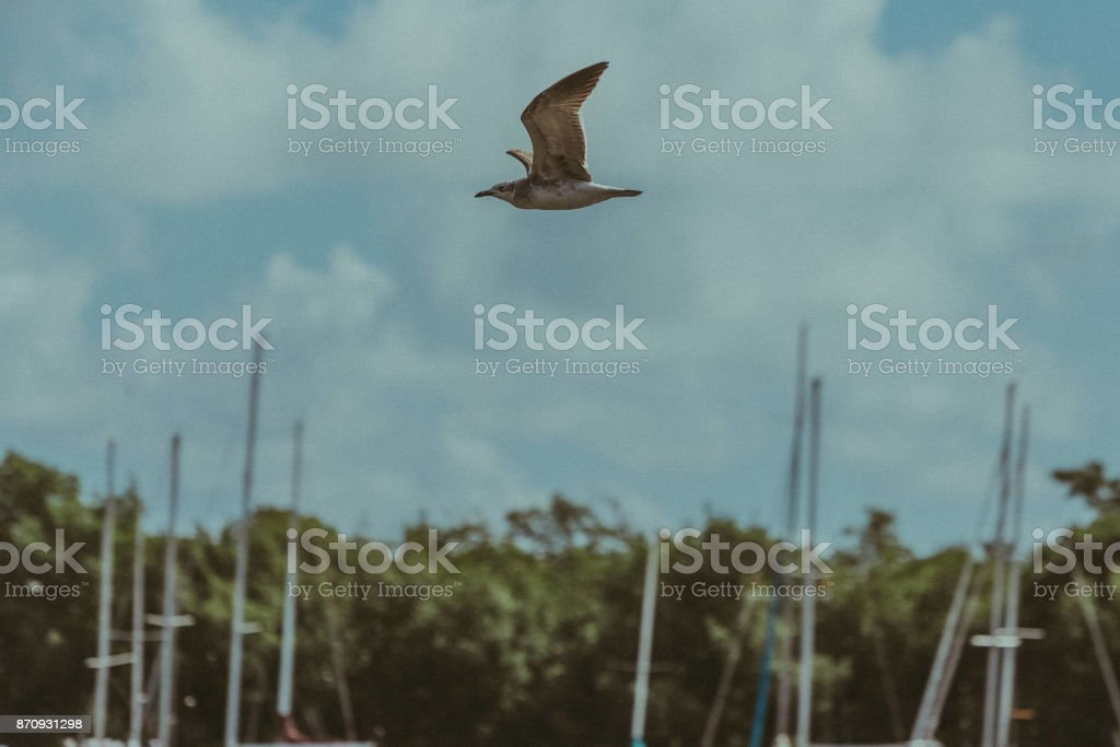 Bird Flying Over The Coconut Grove Sailing Club Stock Photo