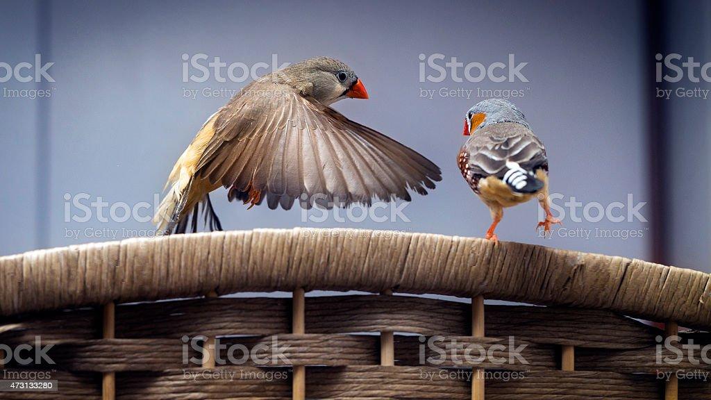 Bird Flying stock photo