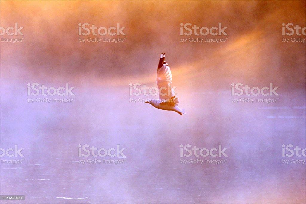 Bird flying through Bow royalty-free stock photo
