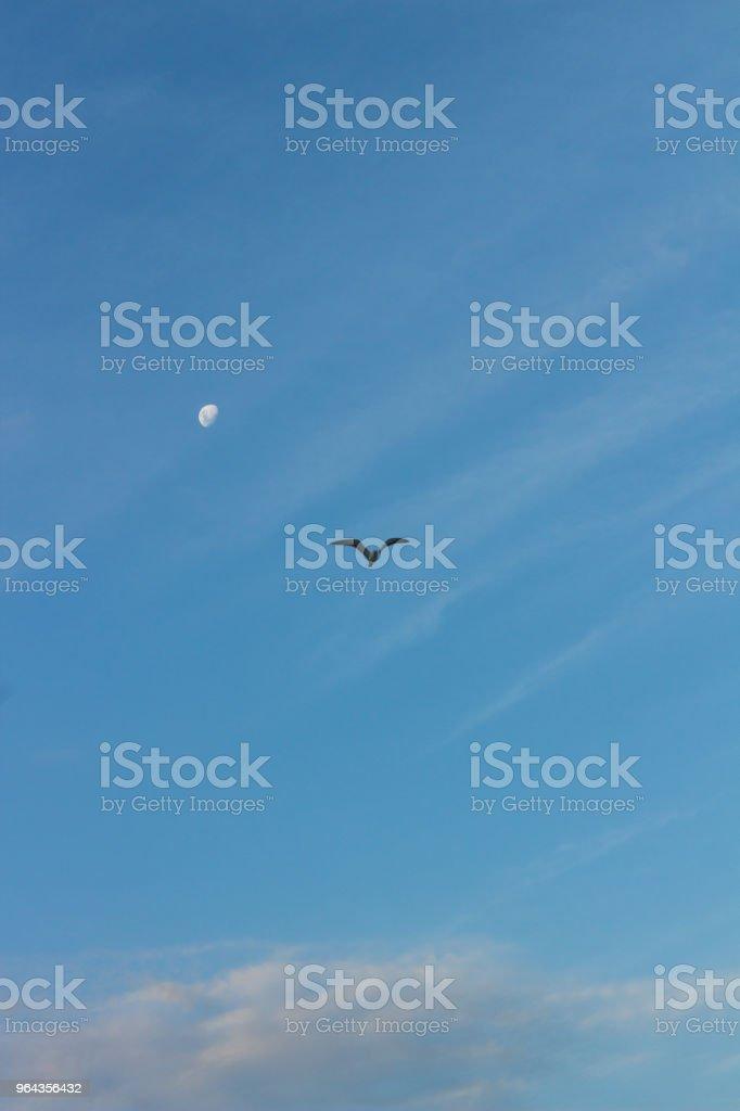 pássaro voando com fundo de lua - Foto de stock de Abstrato royalty-free