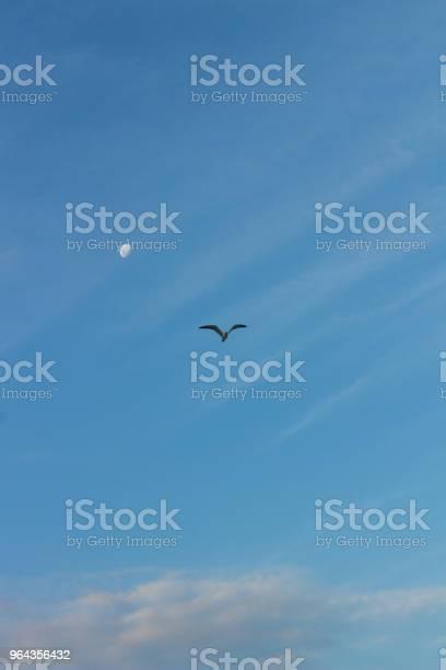 Foto de Pássaro Voando Com Fundo De Lua e mais fotos de stock de Abstrato