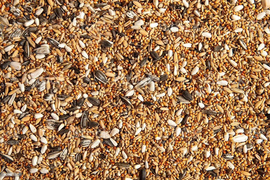 Ptak żywności, rozproszone birdseed – zdjęcie
