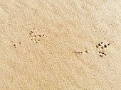 Bird footprints in sand on the beach. Top view.